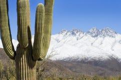 Contraste do deserto Foto de Stock