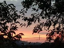 Contraste do nascer do sol e das árvores imagem de stock royalty free