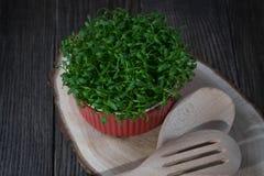 Contraste do vermelho e do verde Salada fresca do agrião no potenciômetro vermelho Fotografia de Stock Royalty Free