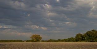Contraste du gravier et de l'arbre de ciel Images stock