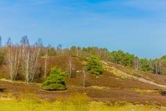 Contraste entre los árboles verdes y los árboles sin las hojas en un día soleado imagenes de archivo