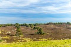 Contraste hermoso de árboles verdes en línea en una tierra seca fotografía de archivo libre de regalías