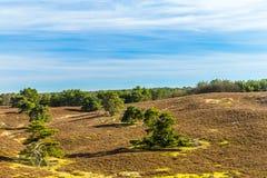Contraste hermoso de árboles verdes en línea en una tierra seca imagen de archivo libre de regalías