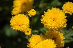 Contraste jaune Photographie stock libre de droits