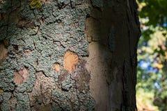 Contraste ligero Texutre de Moss Bark Tree Trunk Dramatic Imágenes de archivo libres de regalías