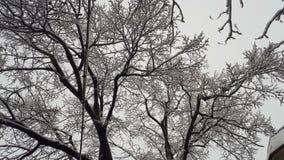 Contraste noir et blanc de papier peint d'arbres de Milou images stock