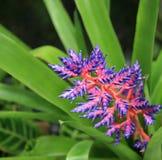 Contraste púrpura Fotos de archivo libres de regalías