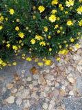 Contraste seco de las hojas en la naturaleza fotografía de archivo