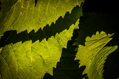 Contrasted green leaves pattern Stock Image