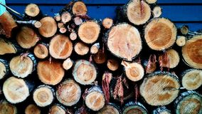 Contrasted Logs Stock Photos