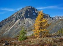 Contrastes d'automne en montagnes Photographie stock