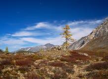 Contrastes d'automne en montagnes Photos libres de droits