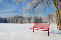 Contrastes do inverno Imagem de Stock Royalty Free