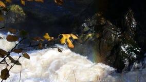 Contrasti della cascata della cataratta di autunno archivi video