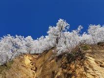 Contrasti di inverno Fotografie Stock Libere da Diritti