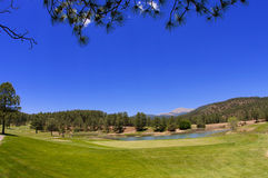 Contrasting Arizona golf course Royalty Free Stock Photos