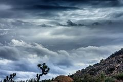 Contrasting Clouds at Elevation. Beautiful and deep clouds with Joshua Trees in the foreground with sloping hill Stock Image