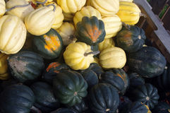 Contrasting Fall Squash Stock Image