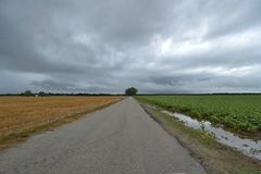 Contrasting Fields across the Road. With cloud cover and a large tree at the end of the road Stock Photos