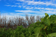 Contrasting landscape colors. Contrasting layers of coastal vegetation and sky Royalty Free Stock Photography