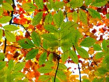 Contrasting Leaves on Trees Royalty Free Stock Images