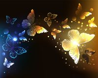 Contrasting night butterflies on black background. Fabulous, glowing, night butterflies on dark night background. Abstract background Royalty Free Stock Image