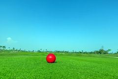 Contrasting of red demo golf ball and green golf course backgrou Royalty Free Stock Photos