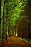 Contrastlicht in het bos stock foto's