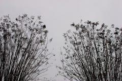 Contrasto dei cespugli di inverno contro neve immagini stock libere da diritti