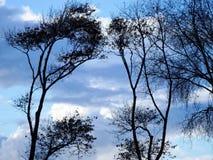 Contrasto del cielo dei rami Immagini Stock Libere da Diritti