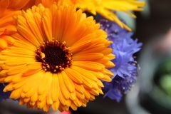 Contrasto del fiore Immagine Stock Libera da Diritti