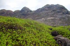 Contrasto della vegetazione Fotografia Stock