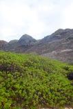 Contrasto della vegetazione Immagini Stock