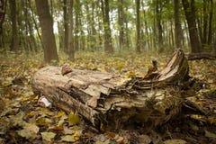 Contrasto ecologico di sforzo dell'albero Fotografia Stock Libera da Diritti