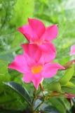 contrasto naturale nel giardino fotografia stock libera da diritti