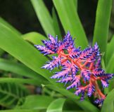 contrastpurple Royaltyfria Foton