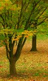 Contrasts of Autumn Royalty Free Stock Photos