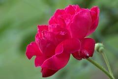 Contrasty Blumenblätter lizenzfreie stockbilder