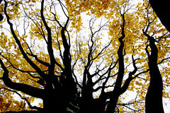 Contrasty drawing-like photo of autumn forest. Contrasty drawing-like photo of an autumn forest Stock Image