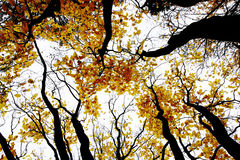 Contrasty drawing-like photo of autumn forest Stock Photography
