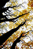 Contrasty drawing-like photo of autumn forest Stock Images
