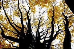 Contrasty teckning-som fotoet av höstskogen Fotografering för Bildbyråer
