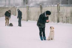Contratan a la mujer joven al entrenamiento del perro Agilidad del perro Perro perdiguero de Labrador bonito Fotografía de archivo libre de regalías