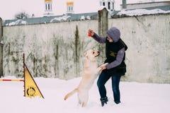 Contratan a la mujer joven al entrenamiento del perro Agilidad del perro Perro perdiguero de Labrador bonito Fotografía de archivo