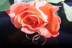 Contrato-anillos Imagen de archivo libre de regalías