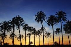 Contre-jour d'or de ciel bleu de coucher du soleil de palmiers Photo stock