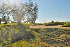 Contre-jour d'olive et de soute Images stock