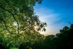 Contre-jour dans une forêt Photo libre de droits
