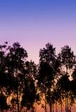 Contre-jour de ciel bleu de coucher du soleil d'arbres en Thaïlande Photo stock
