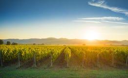 Contre-jour de lever de soleil de vignobles de Bolgheri et de Castagneto Maremma Tus photographie stock libre de droits